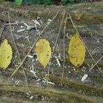 Land-art - Jeu de feuilles